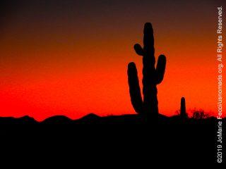 SW_Feb2019_0207-Day2_EnroutetoYuma_saguarosiloredsky_DSCN3312_650w
