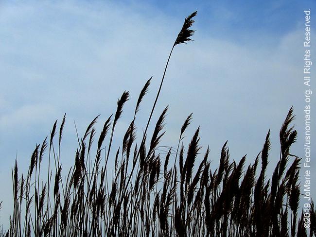 NY_APR2019-0407_LI_FireIsland-seagrasstops_DSCN2655_650w