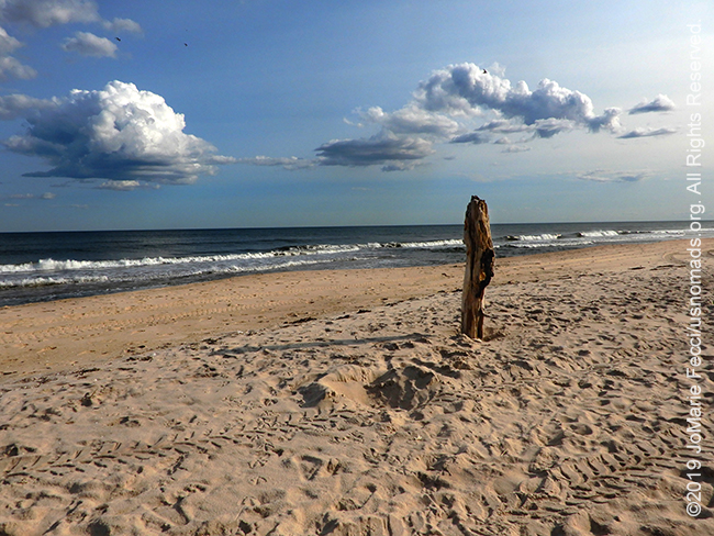 NY_JUN2019_0622_LI_EastEnd-HitherHills_beach_woodenpoleinsand_DSCN4860_650w