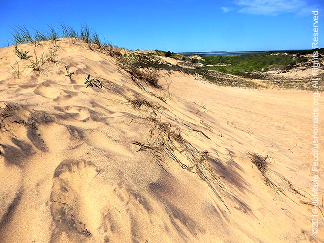 NY_JUN2019_LI_EastEnd-HItherHills_WalkingDunes-dunes_dunestodistantbeach_DSCN4962_650w