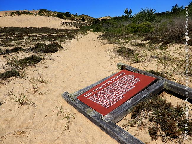 NY_JUN2019_LI_EastEnd-HItherHills_WalkingDunes-dunes_phantomforestsign_DSCN4992_650w