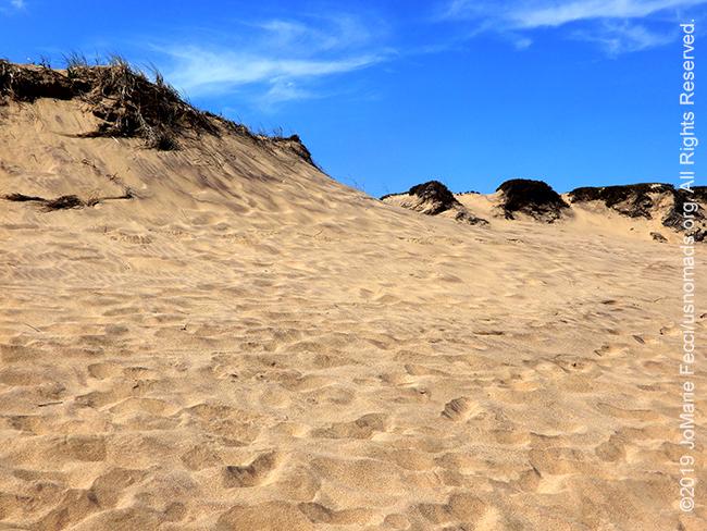 NY_JUN2019_LI_EastEnd-HItherHills_WalkingDunes-dunes_sandyridgewithdriedbrush_DSCN4970_650w