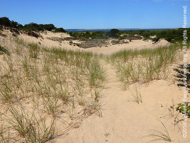 NY_JUN2019_LI_EastEnd-HItherHills_WalkingDunes_dunes-sandydunesexit_DSCN5002_650w