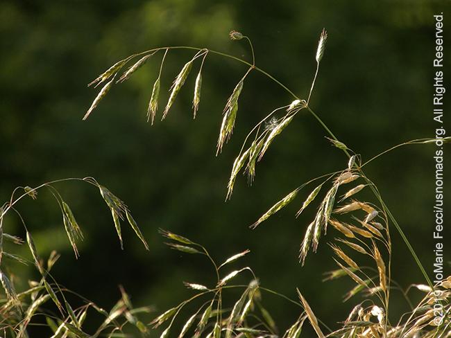 PA_JUN2019_BantamRT-0603_BaldEagle_grassbacklit_DSCN4412_650w