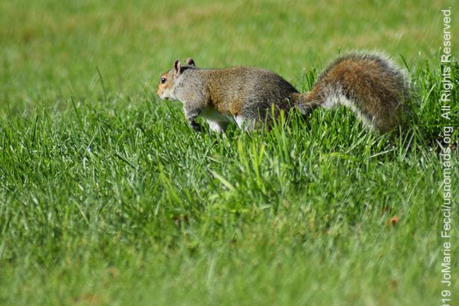 PA_JUN2019_BantamRT-0604_BaldEagle_squirrelingrass_DSC_0242_650w