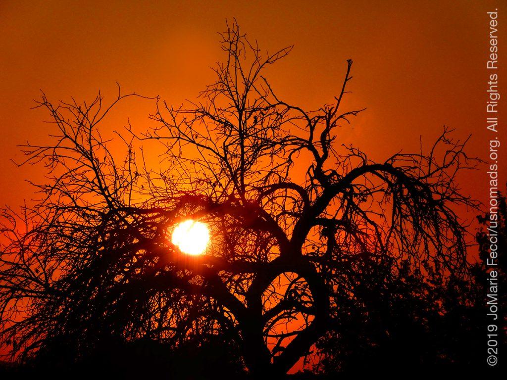 Serbia_Aug2019_Day02_Miliva-sunset_sunthrutreeaseyeCU_DSCN6370_1200w