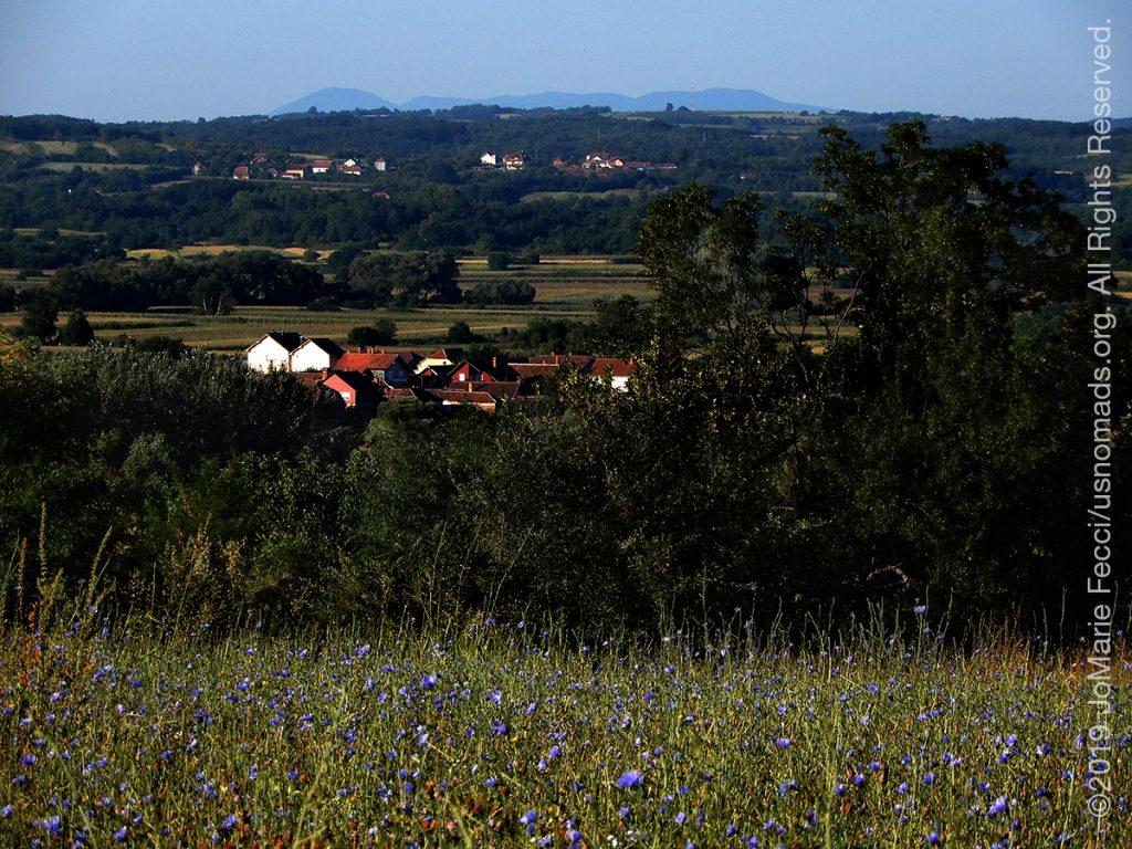 Serbia_Aug2019_Day04_Miliva-walk_wildflowersvillagedistantmountains_DSCN6423_1200w