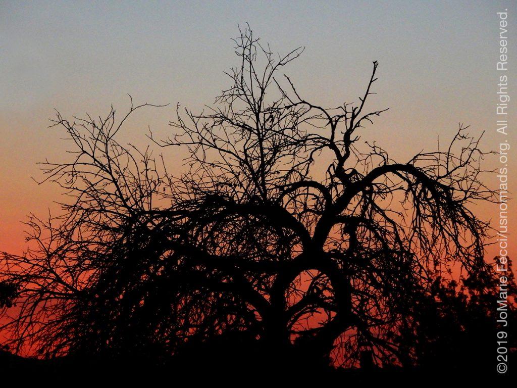 Serbia_Aug2019_Day06_Miliva-sunset-gnarlytreepastelblueandred_DSCN6487_1200w