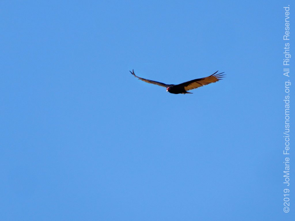AZ_LONtrip_OCT2019_1005-Day03-TucsonRR_birdatlunch_DSCN7713_1200w