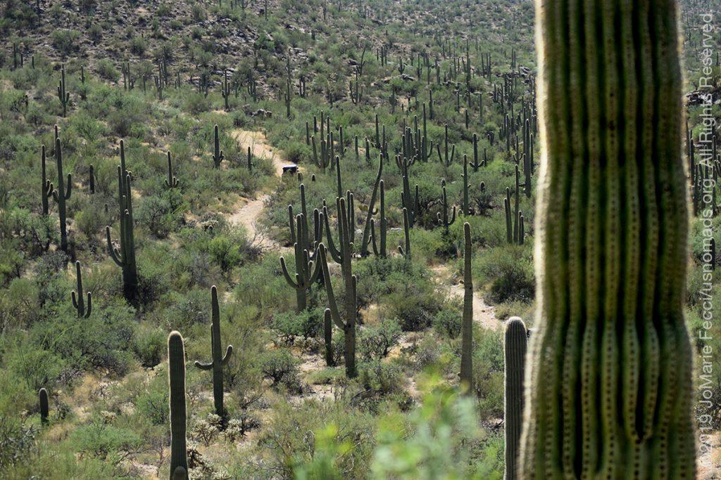 AZ_LONtrip_OCT2019_1005-Day03-TucsonRR_valleyofcactus_DSC_0587_1200w